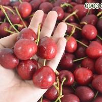 cherry_do-canada3