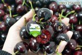cherry_new1