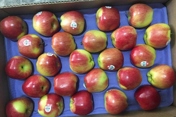 Thùng táo Ambrosia